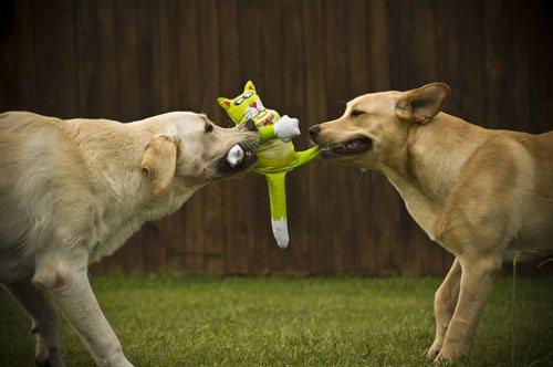Собаки и игрушечный котенок